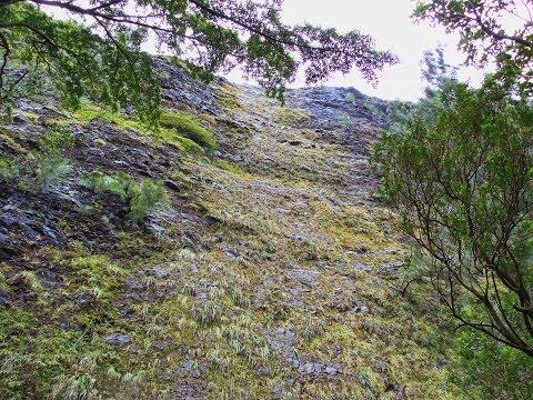 howzitboy hikes: Waipuhia falls (the upsidedown waterfall)