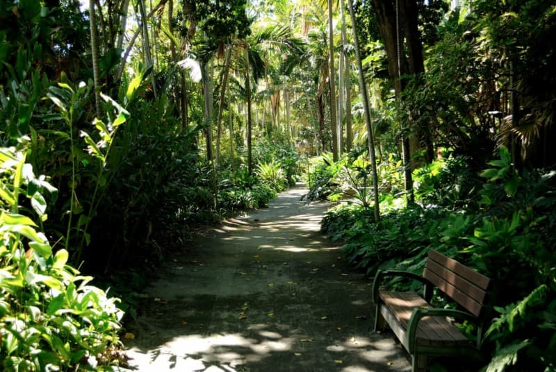 Path and bench in the Foster Botanical Garden