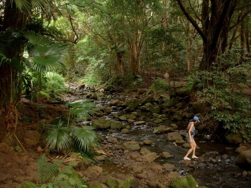 The hike to the Maunawili Falls