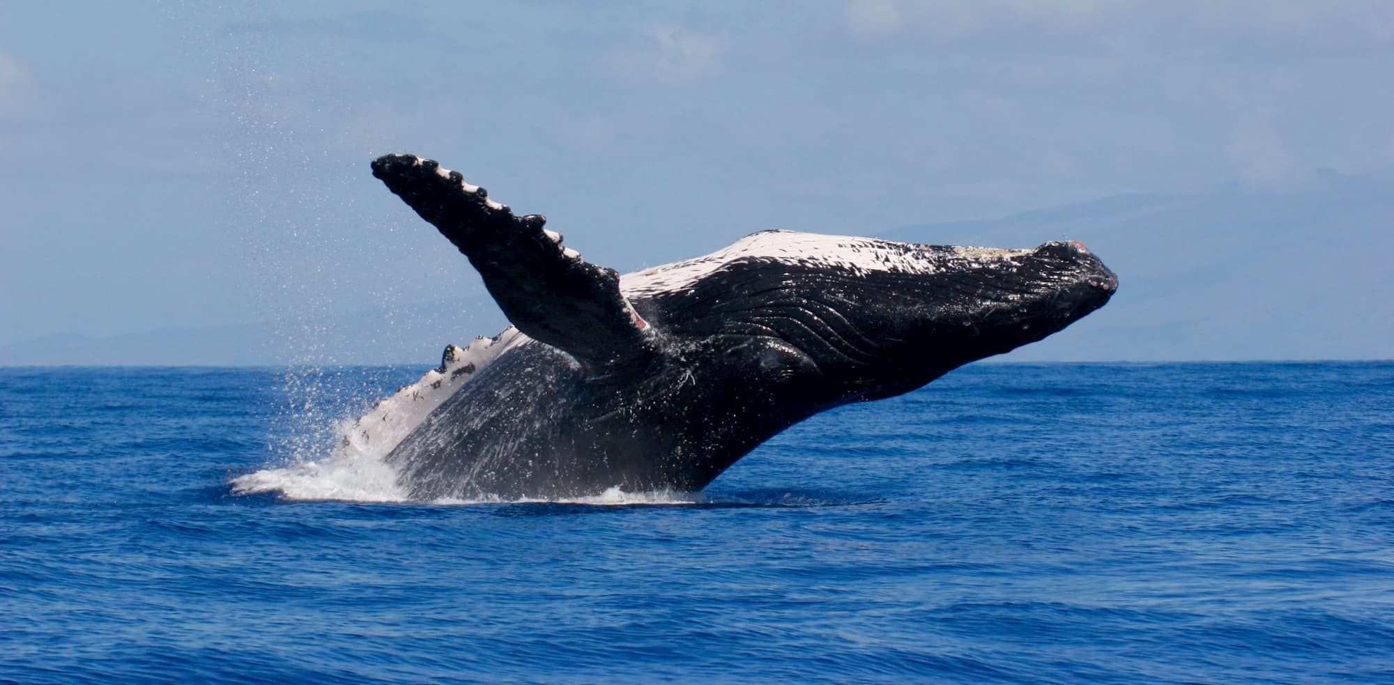 Whale watching (boat tours and DIY)