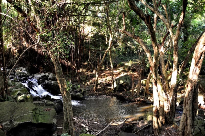Kapena Falls on O'ahu