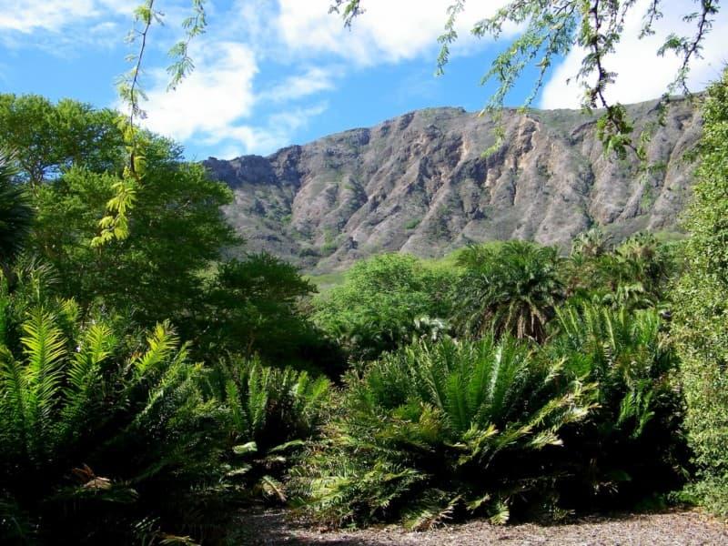 Koko Crater Botanical Gardens