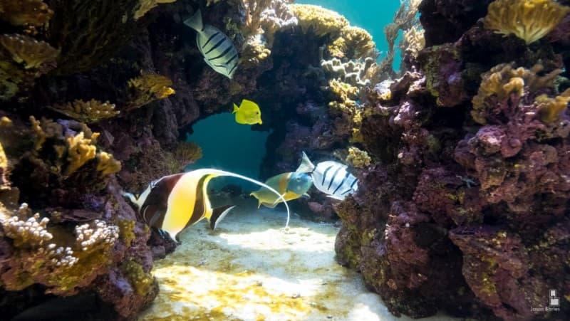 Tropical fish in the Waikīkī Aquarium